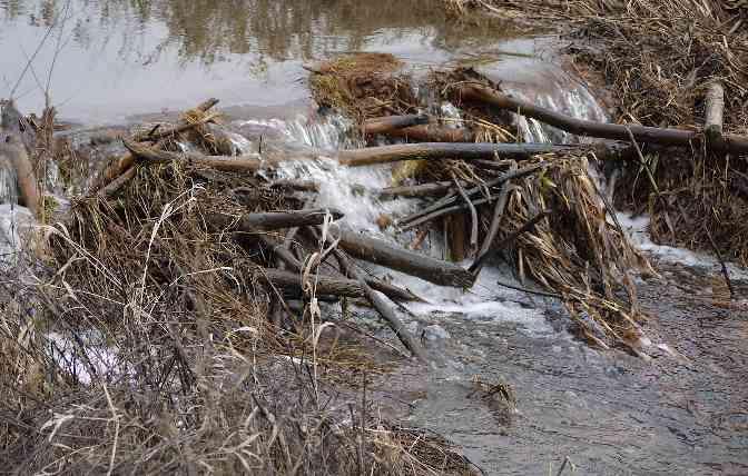 Vijver dammen met hout