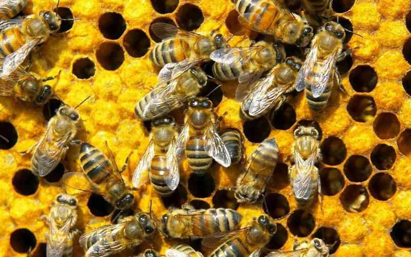 Enorme zwerm honingbijen