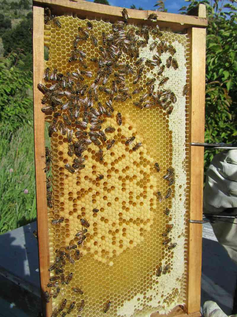 Imker honing kweker bijenkorf