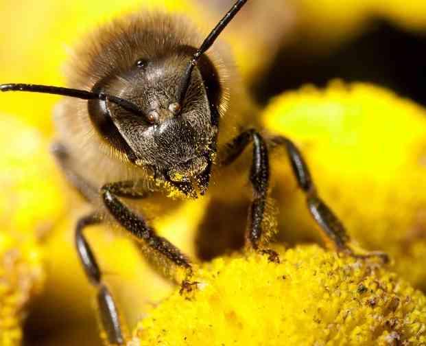 Zoemende bijtjes