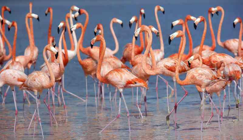 Groep Flamingo's in het water
