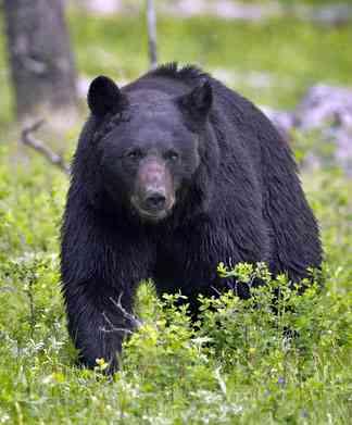 Mooie zwarte beer