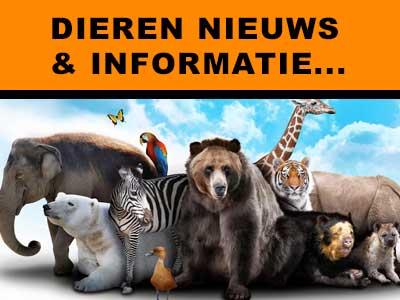 Dieren moment, het dierenrijk zonder dierenleed met tamme en wilde beesten op aard, natuur informatie dierensite