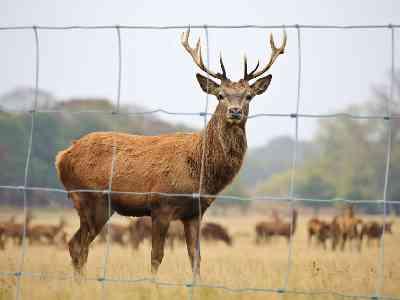 Hekken voor dieren werken averechts