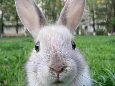 Verharing van het konijn