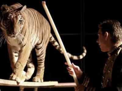 Domteur aangevallen door tijger in circustent Madrid