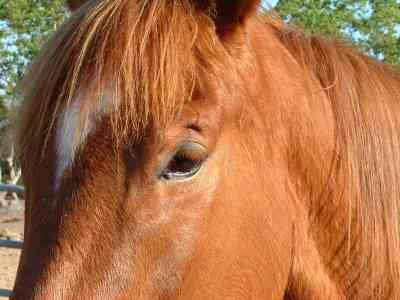 Paard met koets en al de sloot in