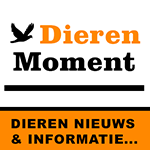 dierenmoment.nl